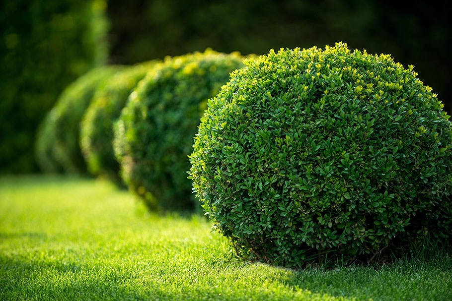 Best Hedge Trimming in Auckland for you