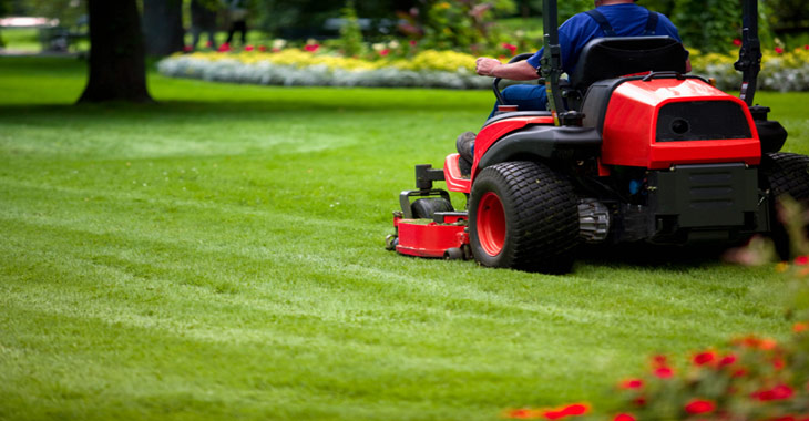 Cutting Lawn Mowing Services in NZ