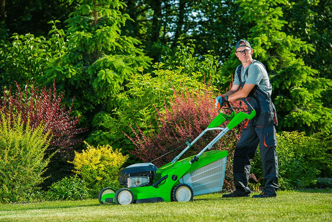 service-lawn mowing